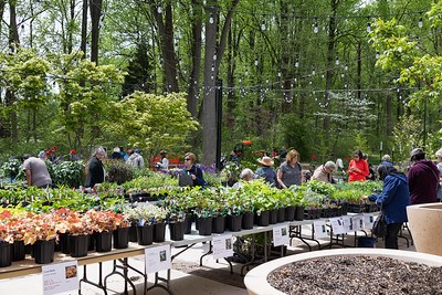 People looking at potted plants on tables.