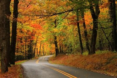 Fall Foliage in Garrett County, Maryland