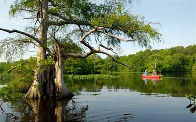 Nassawango Creek Preserve