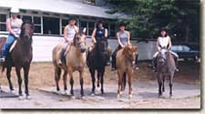 Horse riding at horse farm