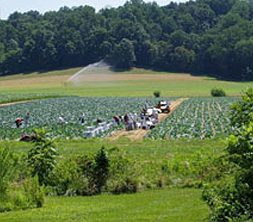 Photo Credit: Richardson Farms-White Marsh