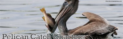 Pelican Catch Charters