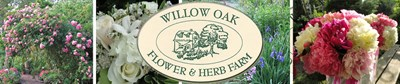 Photo Credit: Willow Oak Flower & Herb Farm