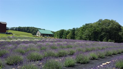 Photo Credit: Deep Creek Lavender Farm