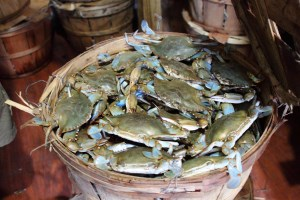 Bushel of blue crabs harvested by Southern Maryland watermen