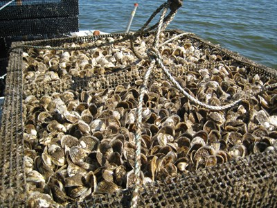 Photo Credit: Patuxent Seafood Company