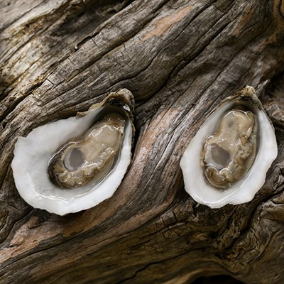 Photo Credit: Hollywood Oyster Companay