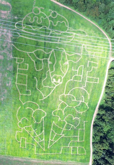 Rock Hill Orchard corn maze