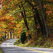 image showing fall foliage in Garrett County