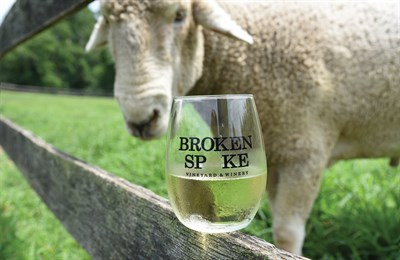 Picture of a sheep with a glass of white wine from Broken Spoke Vineyard and Winery